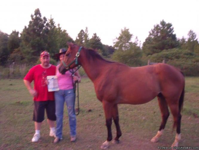 horses for sale by owner. - Price: 300.00 and up