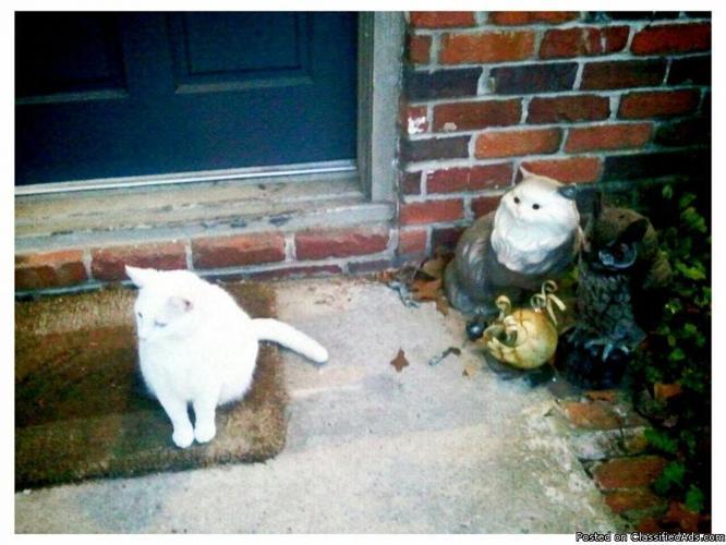 Lost white female cat!