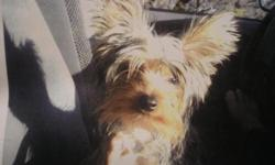 She is loved and missed so very much. $100.00 reward. Area of Victor/Hartnell/Cypress. Please call. Thank you so much!