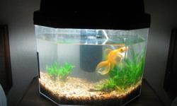 Everything: gold fish, tank, filter and supplies.