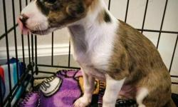 I have 3 Adorable Chihuahua Puppies 1 boy and 2 girls that need a loving home. The rehome fee is $375 they will come with their first set of shots along with frontline, two puppy pads and a bone. They are crate trained and potty trained. They are purebred