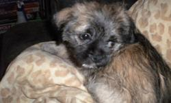 Hi I have three adorable, smart,great temperment and personalities puppies looking for a loving forever home They are Pug/Havanese mix mom is full blooded Havenese and dad is full blooded Pugthey have had thier wellness check first shots and have