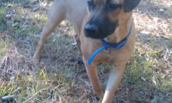 I have an American Bulldog/Shepard mix - she is one year and I adore her. I just moved to my parents house from college and they do not want a dog. She is all brown with a black muzzle. She has a wonderful personality. She does need to be exercised