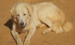 Anatolian- Great pyr. she is a adult female and has been with goats.