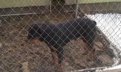 Rottweiler Pups for sale. AKC Registered, Shots, Declaws removed and Wormed. Ready 4-1-11. Deposit to hold. Please call for more info at 618-401-5240.