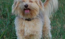 12 lb male mixed breed sandy color shaggy. Very Shy with strangers. Lost june 28th in Harrisburg/ walton way area