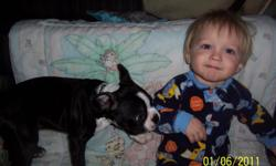 I have a beautiful Boston Terrier male puppy for Re-Homeing. He is three months old black and white. No papers. I want to ensure this puppy goes to a good home. I just don't have the time I thought I would have for him. He is a very energetic Puppy loves
