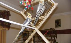 i have a breeding pair of cockatiels for sale. they are about 6 years old and great parents. both mom and dad build the nest, set on the eggs and feed the babies. usually they have 6 egg and all hatch. they are very friendly birds