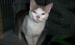 My name is Lil Jon aka Jon Jon I am a year old. I never got to be a kitten living on the streets. I was in pretty bad shape when Denise found me. But thanks to her care & love I am all better!! Hi, This is Denise. Jon Jon is a very very passionate loving
