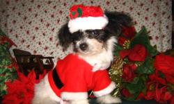 Please take a look at my website@www.tjspreciousdesignerbreeds.com to find out all about them. Thanks Tammy -- and to see pics of all they will not all load
