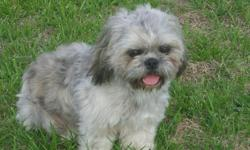 I have a CKC Reg. Male shih-tzu he is 15 mths old and rabies are good untill 5-8-11. His colors are silver/brindle and he is house broken. He is not fixed ... for more information please call 931-853-4102 or 931-201-6042... I live in Loretto,TN... I have
