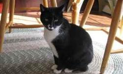 10 year old black and white male house cat named Boxer. Has had all of his shots, is liter box trained, has had his front claws removed and is neutered. He is a good cat. Likes to be loved. We need to give him a new house as he is not getting along with