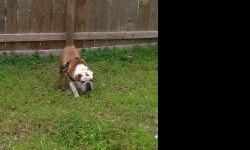Im looking forward to rehoming my 2yr old English Bulldog Male he is AKC Registered and up to date on all of his shots and has no health issues what so ever! Is great around my 2 kids! And has been an inside pup Since he was Just 2 Months, He is fully