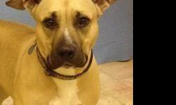 PLEASE ASK FOR THE ADOPTION FEE  Hello, my name is Sissy! I was surrendered by my owner. This is what she has to say about me: I'm house trained, happy go lucky, and ride well in the car. I know the sit and shake commands. I like to play fetch. I
