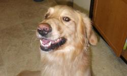 Found Golden Retriever on Nov 23th between ASU and Matthews area..Male, Around 1-2 yaers old, He is really nice with kids and other dogs, he had yellow collar with black stripes, .he is very sweet and playful.. please contact ..