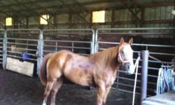 Sorrel with blaze and three white socks. This mare is Leo Bred.
