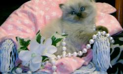 Himalayan and Persian Kittens coming soon.  Expecting a litter early Feb and now excepting deposits. Visit us at www.phkittens.com for pictures and info. 901-759-1300
