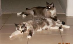 Need to find a good home to these very loving, well trained, beautiful cats. They are 5 yrs old. No health issues or behavior problems. I would be willing to separate them if needed. They are Siamese/ragdoll/??? Very loving and personable. Would prefer no