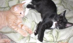 4 Kittens! Free to a good home, litter trained and eating canned,hard food. No longing nursing. They are 8 weeks old and ready for their own family. Call 898-7856 anytime for time to see kittens. One all black female, 3 males an orange and white tabby,
