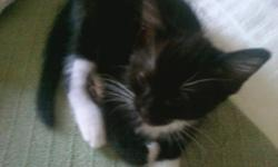 I have 1 adorable kitten needing good home!Litter box trained and weened !!!! Loads of fun to be had with this friendly out going companion.  White and black female is still looking for good home.This kitten has so much personality and lots of love