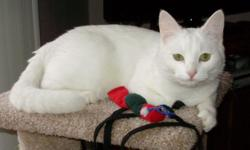 Lost Cat: all white, shorthair, small adult, female cat with yellow/green eyes is missing fromnear 5th and R St, Lincoln. Last seen 11/22/12. If seen, please respond via email or phone --.
