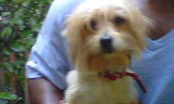 I have lost my female Yorkshire Terrier 5lbs blond color and groomed with puppy hair cut. Her name is Princess and she is very loving and friendly and she is a part of our family.