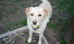 Lorado went missing from Dove Drive in Fayetteville, near the Porter Rd exit and Mount Comfort. She is unique in that she looks like a yellow lab but has one black eyebrow. She is shy but sweet so if you see her, please contact me.