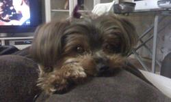 We lost our Yorkshire Terrier (black/tan) on the night of 7/3 in Fair Oaks, CA. We live on Divot Circle, cross Streets Madison/San Juan Avenue. We live on Northridge Golf Course. Her name is Lola and we are desperately trying to find her. She is such an
