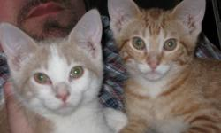 2 male kittens, 17 weeks old, to good home. Litter trained, had shots, very playful, loving, healthy and full of energy! Call 870-595-3534, leave message if no answer.