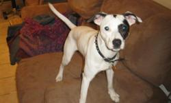 3yr old Jack Russell and Terrier mix 20 pounds. Lost around Cleavland St. and Lindell St. Comes to the name Bettie. missing since Feb. 17 2011. She ran off with out her collar and has a chip. Please call me if you find my little circus dog.