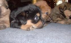 7 little mixed pups looking for a loving home.Please contact Michelle @ eriksonme@gmail.com