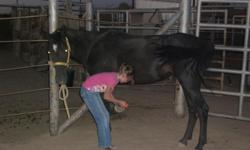 This mare is absolutely wonderful. She's not real big, but will continue to fill out. She's all black with a star on her forhead and is excellent with children. She is trained, can stand for the farrier, loads, leads and ties well. We have ridden her in