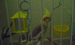Breeder Pair comes with cage and nesting box