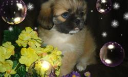 i have pekingese babies for sale , they are all so very cute and would make a great companion for anyone,they have been around other pets and kids as well , they are ckc registerable ,have had first shots and up to date on worming ,my males are 350.00 and