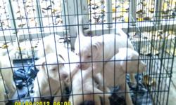 9 wks old, wormed ready for good home 2 females 125.00 ea 5 males 100.00 ea call -- or --