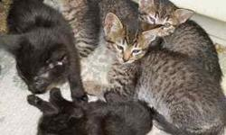When Responding to this add please Email me first..... So I can get your phone number.... cpl folks are interested but they spoke to quickly and I could not get their phone number. I have 6 ocicat kittens. They have had their 1st shots are Reg. and well