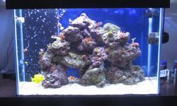 "Fish List 4"" Emperor Angelfish - changing 3"" Yellow Tang 3"" Hippo Tang 2.5"" Eilbi Angelfish 2"" 6 Line Wrasse 2 X 1.5"" percula Clowns Invertebrates 20 X Blue Legged Hermits 18 X Turbo Snails 1 X Sally Lightfoot 70-90 Lbs Coralline encrusted live rock Coral"