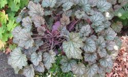Healthy plant with unknown interloper.