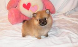 Small Pomeranian puppies available. 2 females, 2 males. Born 06/22/11. Blue/White parti's, and Oranges, Black/Tans, Whites, Creams... Prices start at 400-450.00 and Tcups are 500.00 Current on vaccines & dewormings. Raised in my home, playful and very