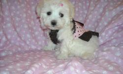 WE HAVE A GORGOUS FEMALEMALE POM PUPS ,SOFT COAT, HYPO ALLERGENIC, SHOTS, WORMED, POTTY TRAINED ON PEE PADS, CRATE TRAINED, WONDERFULL LAP DOGS, WELL SOCIALIZED DAILY WITH FAMILY AND KIDS, READY TO GO TO NEW HOME, PUPPY COMES WITH A GOODY HANDBAG, TOYS, T