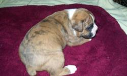 He will be up to date on his shots and wormings, raised in my home and played with everyday, I do not ship. He will be 9 weeks old the Monday beforeChristmas.He isRegistered, he was born 10-20-14
