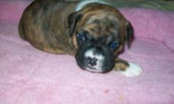 Shewill be upto date on her shots and wormings, she is raised in my home and played with everyday. She will be 9 weeks old the Monday before Christmas, Born 10-20-14I do not ship.