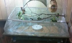 3 female and 2 male zebra finches with nice cage including cage skirt.